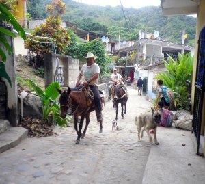 yelapa-mexico-horses